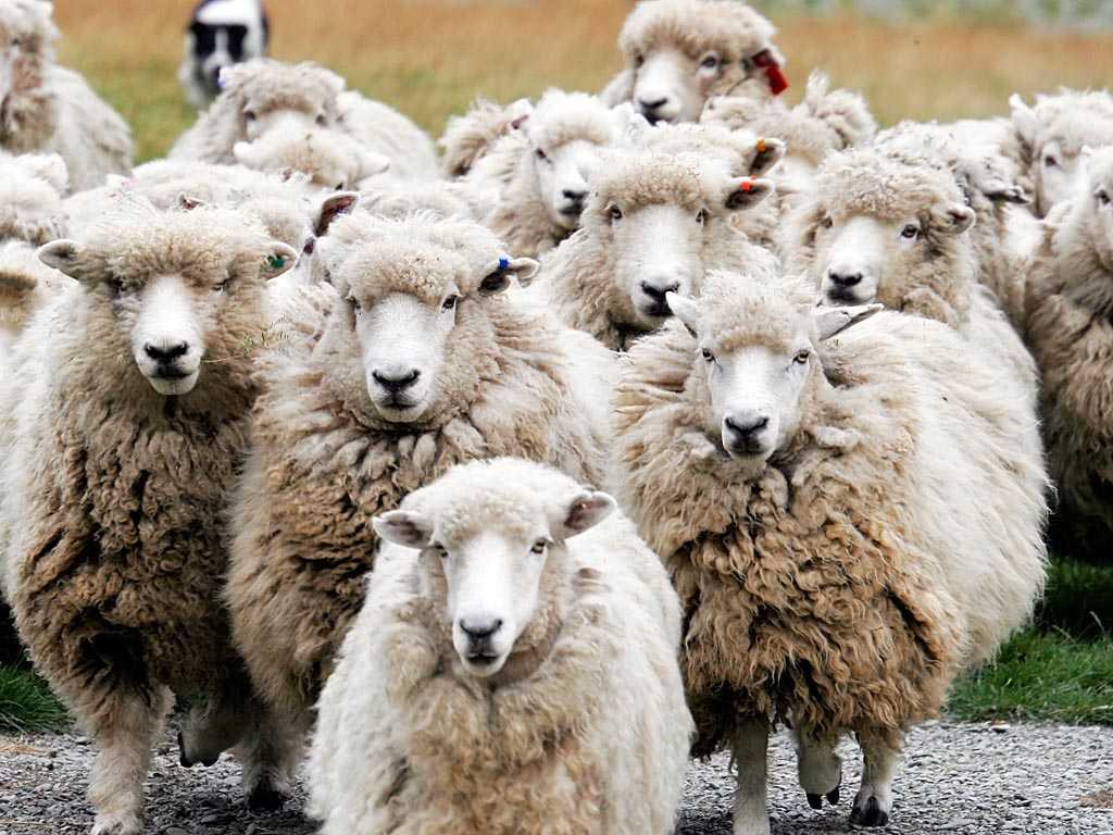 антиматриархат- девочки овечки!